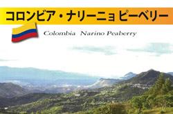 コロンビア・ナリーニョ ピーベリー